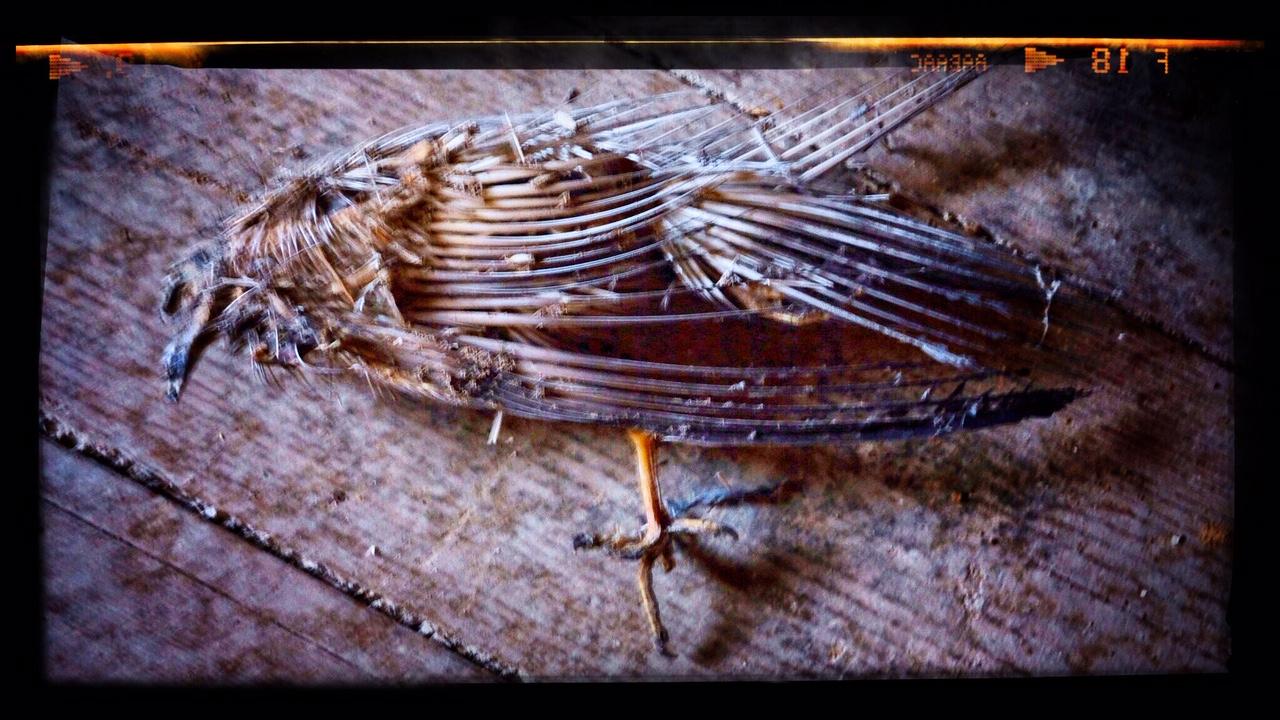Bild på död duva i Lagerhaus G Bild: IF
