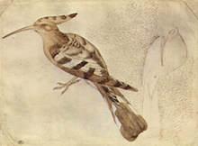 Akvarell av Pisanello (1430-1440)