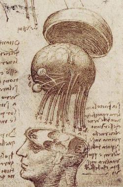 Leonardo da Vinci - studie av den mänskliga hjärnan